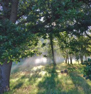 Nebel kann die Herbstdepression fördern