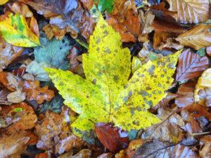 Herbstlaub lädt zum Spielen ein